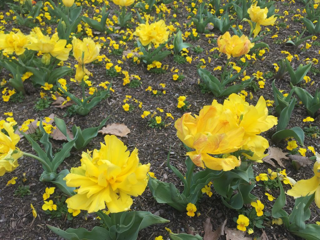 03 Yellow flowers iPhone 6