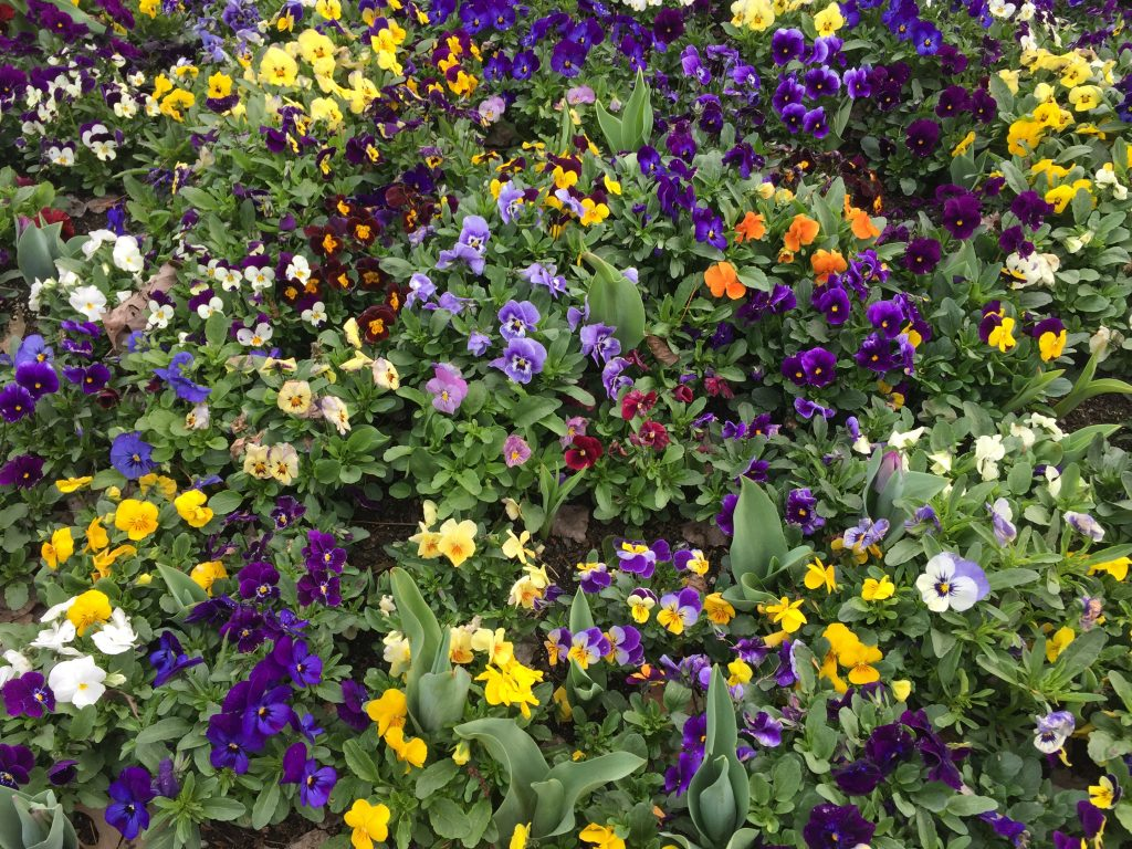 08 Mixed colored flowers iPhone 6