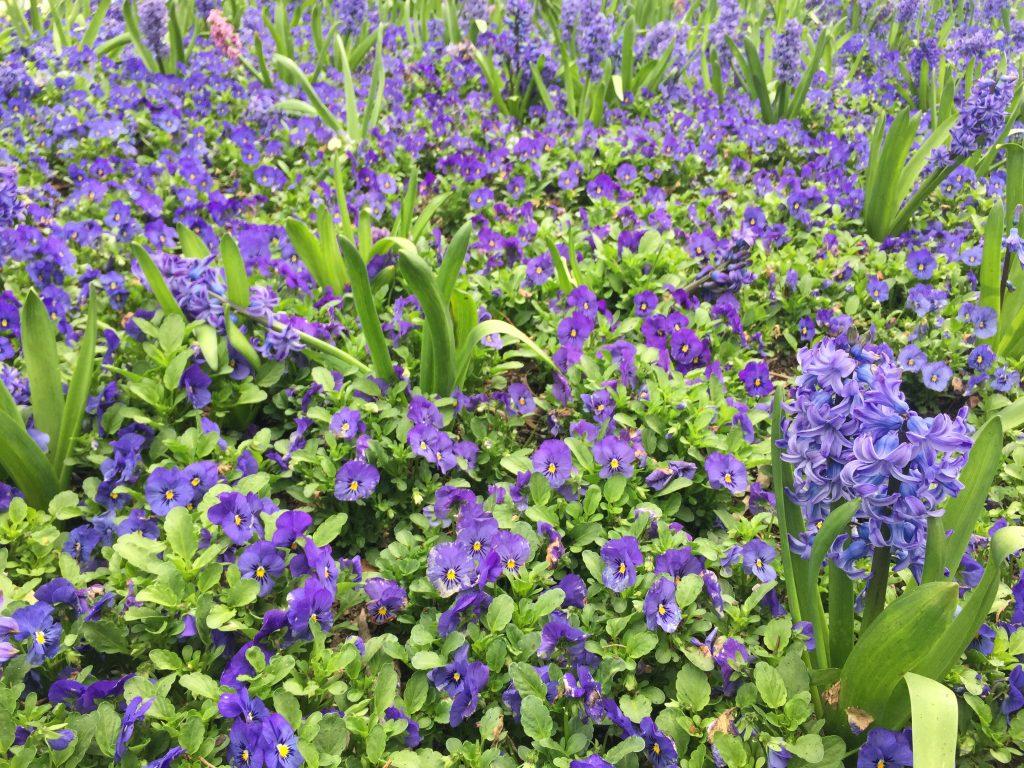 09 Purple flowers iPhone 6