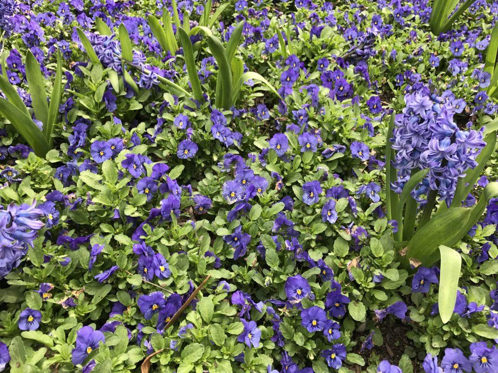 09 Purple flowers iPhone 7